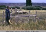 Sheep corral, Albion, Idaho, 1970