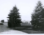 Scenic view showing tree plantings on campus, 1920s