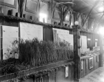 Wheat exhibit at Utah State Fair, 1913