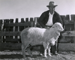 Man showing off sheep