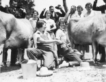Two milking competitors shaking hands, 1920s