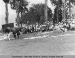 Cattle judging, July 23, 1932