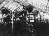 Interior view of conservatory, circa 1917