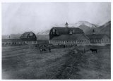 Barns, sheep and cattle on campus, 1902