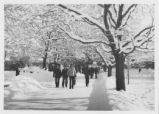 Winter scene of the sidewalk north of the Quad, showing snow depth, ca. 1978