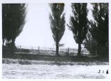 View of Greenville Experiment Station Farm in North Logan, Utah, circa 1903