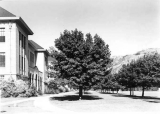 View of trees and buildings along north side of Quad, circa 1935