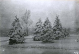 Snow-covered tree plantings on campus of Agricultural College of Utah, 1920s