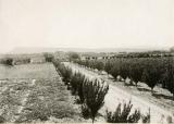 View of St. George Experimental Farm in St. George, Utah circa 1905