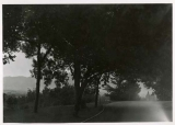 Scenic view showing tree plantings on campus of Agricultural College of Utah, 1920s