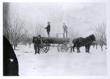 Spraying fruit trees in Experiment Station Orchard, March 1898
