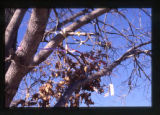 Tree decorated with ribbons in a cemetery in Salt Lake City, Utah, 2000 (60 of 96)
