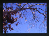 Tree branch in a cemetery, Salt Lake City, Utah, 2000 (62 of 96)