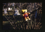 Teddy bear in a tree, near a cemetery, Salt Lake City, Utah, 2000