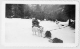 Erickson in dog sled at Yosemite National Park