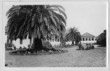 Men by a large palm tree, Presidio of San Francisco
