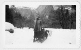 Dog sled and driver at Yosemite National Park
