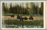 Bears at Lake Hotel postcard, Yellowstone National Park, 1912
