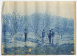 Four men standing examining flowering tree, two men in uniform, 2 of 3. Duplicate of 1:18:09