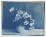 Blossoming plant in a pot. Duplicate of 1:09:17, ACU, 1896-1916