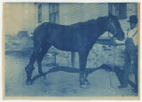 Horse with abscess/disease(?) on right hind leg. Veterinary Science/Hospital building in...