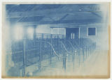 Empty stalls in Cattle Barn. Duplicate of 1:11:17 and 6:64, ACU, 1901