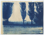 Trees and fence line. Duplicate of 1:19:16, ACU, 1896-1916