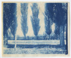 Trees and fence line, Duplicate of 1:19:18, ACU, 1896-1916