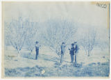 Four men examining blossoms on a tree. Duplicate of 1:13:09, ACU, 1896-1916