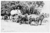 Woman in a four-horse drawn wagon