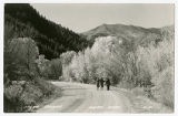 Real Picture Postcard of Logan Canyon