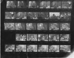 Proof sheet of 35mm negatives