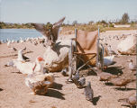 Color image of a wheelchair on a beach with birds